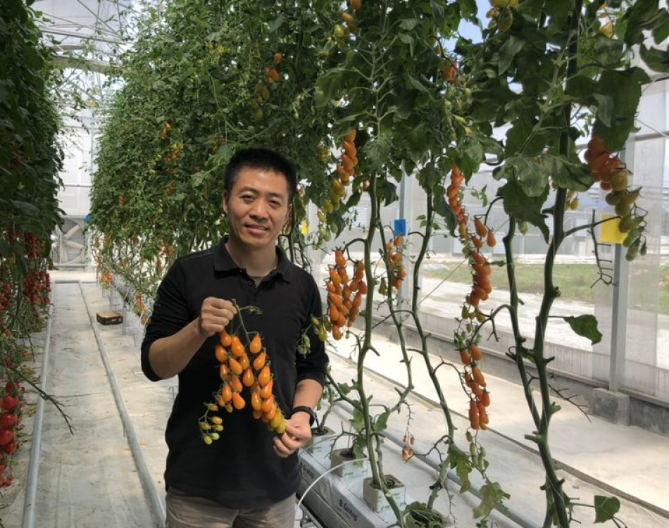 Bobby Agriculture man in tomato greenhouse China